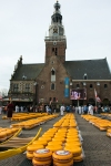 Alkmaar Cheese market